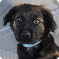Adopt A Pet :: Enzo-Adopted! - Detroit, MI