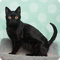 Adopt A Pet :: Laveau - Chippewa Falls, WI