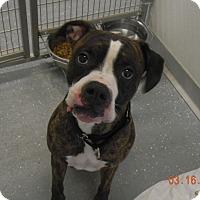 Adopt A Pet :: CESAR - Sandusky, OH