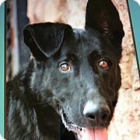 Adopt A Pet :: KING VON KIEFER - Los Angeles, CA