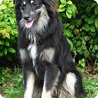 Adopt A Pet :: Sassy - Bedminster, NJ