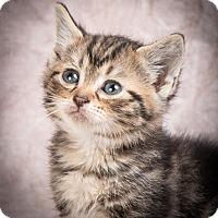 Adopt A Pet :: DANA - Anna, IL