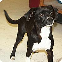 Adopt A Pet :: Barney - Harrisburg, PA