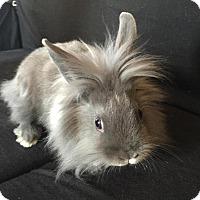 Adopt A Pet :: Donut - Conshohocken, PA