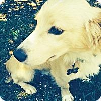 Adopt A Pet :: Oliver - BIRMINGHAM, AL