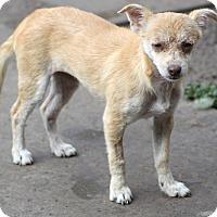 Adopt A Pet :: Boston - MEET ME - Woonsocket, RI