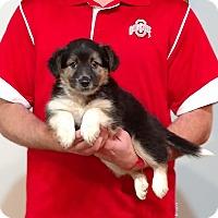 Adopt A Pet :: Cali - Gahanna, OH