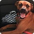 Adopt A Pet :: Blythe