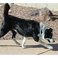Adopt A Pet :: Jake - Tempe, AZ