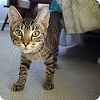 Adopt A Pet :: Taltos - Virginia Beach, VA