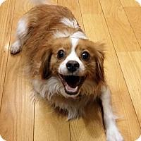 Adopt A Pet :: Squiggle - Philadelphia, PA