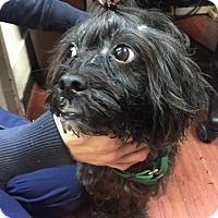 Adopt A Pet :: Cody - Mine Hill, NJ