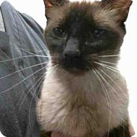 Adopt A Pet :: MINNIE - Tulsa, OK