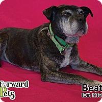 Adopt A Pet :: Beatrix - Sharon Center, OH
