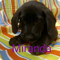 Adopt A Pet :: Miranda - Garden City, MI