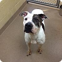 Adopt A Pet :: 1-11 Gia - Triadelphia, WV