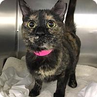 Adopt A Pet :: Deanna - North Las Vegas, NV