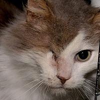 Adopt A Pet :: Icicle - Medina, OH
