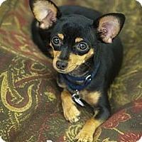 Adopt A Pet :: Martini - Phoenix, AZ