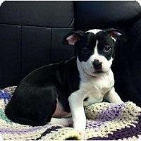 Adopt A Pet :: Reno - Rochester, NY