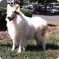 Adopt A Pet :: Tigger - Columbia, SC