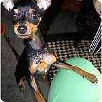 Adopt A Pet :: Posh - Florissant, MO