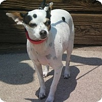 Adopt A Pet :: Minnie - Colorado Springs, CO