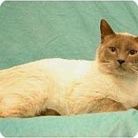 Adopt A Pet :: Lucas - Sacramento, CA
