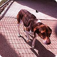 Adopt A Pet :: Maddie - Peru, IN