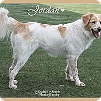 Adopt A Pet :: Jordan - Rockwall, TX