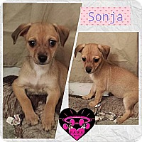 Adopt A Pet :: Sonja - Fowler, CA
