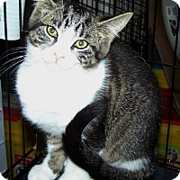 Adopt A Pet :: Stephie - Fort Wayne, IN