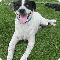 Adopt A Pet :: Trisha - Phoenix, AZ