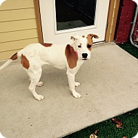 Adopt A Pet :: Sparkles - Nashville, TN