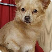 Adopt A Pet :: RUDY - Elk Grove, CA