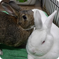 Adopt A Pet :: Cookie & Eduardo - Montclair, CA