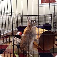 Adopt A Pet :: Mudslide - Conshohocken, PA