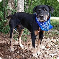 Adopt A Pet :: Junior - Maryville, TN
