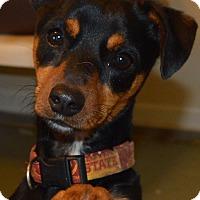 Adopt A Pet :: Bandit - Prole, IA