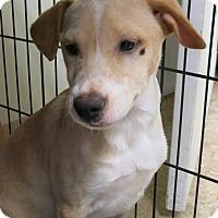 Adopt A Pet :: Hallie - Clear Lake, IA