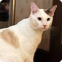 Adopt A Pet :: Albertus Magnus (Al) - Ennis, TX