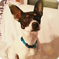 Adopt A Pet :: Nugget - Knoxville, TN
