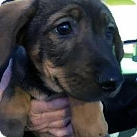 Adopt A Pet :: Dayton Pup - Cambridge - Adopted! - San Diego, CA