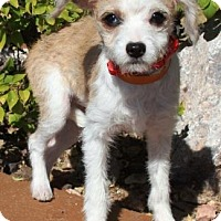Adopt A Pet :: Monet - Gilbert, AZ