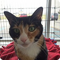 Adopt A Pet :: anise - Muskegon, MI