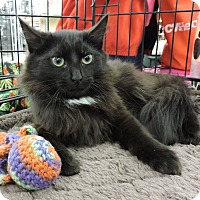 Adopt A Pet :: Bear - MARENGO, IL