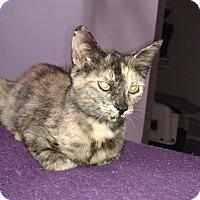 Adopt A Pet :: Belle - Tampa, FL