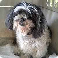 Adopt A Pet :: Patches - Odessa, FL