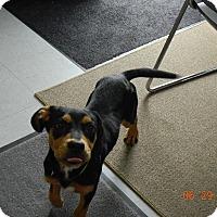 Adopt A Pet :: SASHA - Sandusky, OH