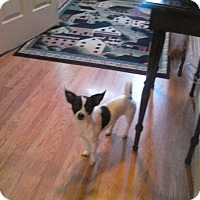 Adopt A Pet :: Buddy - oxford, NJ
